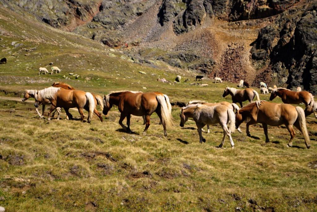 horses in the berg