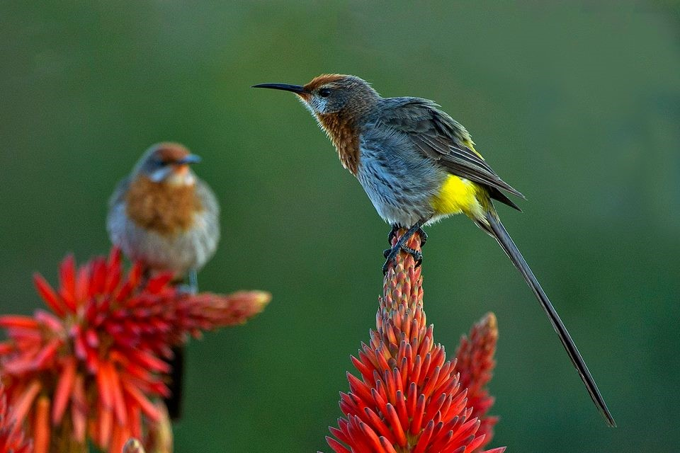 Wildlife And Birdlife In the Drakensberg Mountains