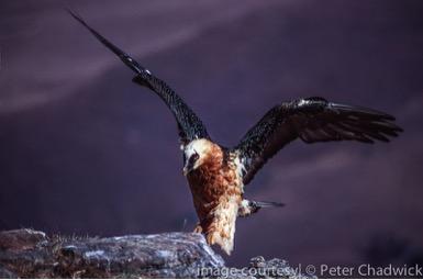 Drakensberg Mountain Retreat Bird Watching