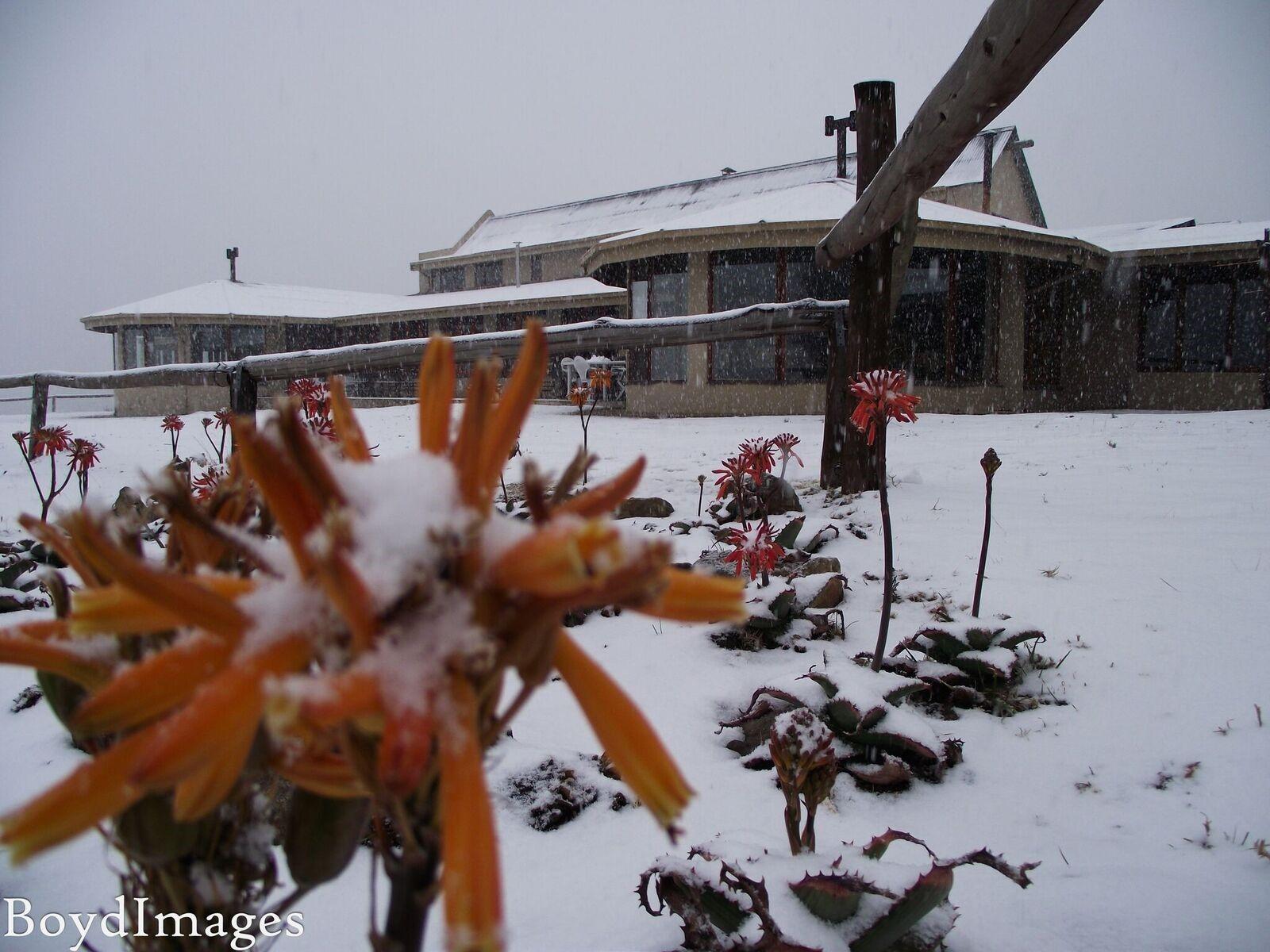 Snowy Flower At DMR